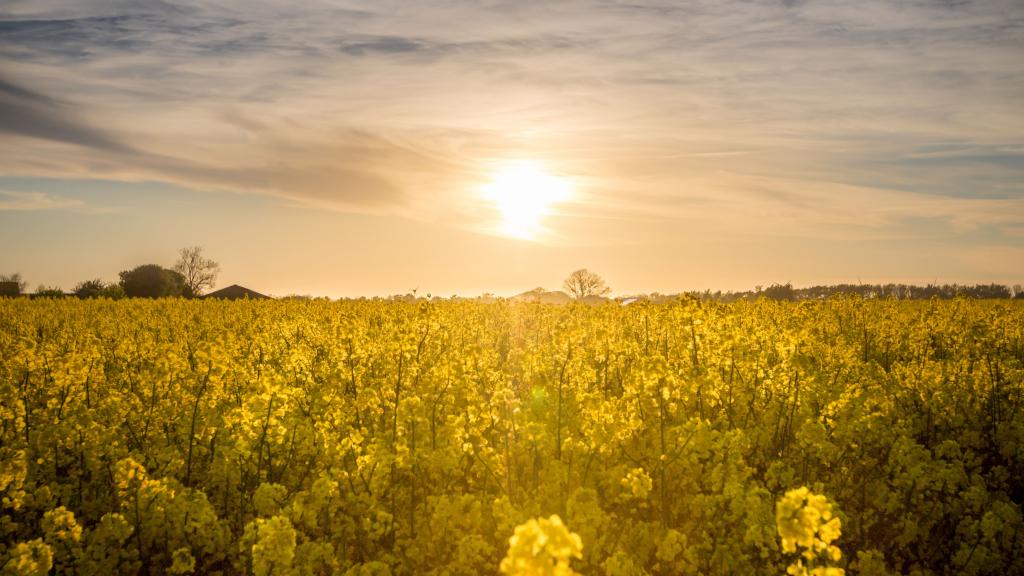 Nueva gama de aceites de semillas Sostenibles