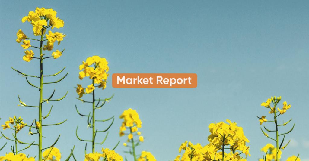 Market report <BR>1H NOVEMBER 2020