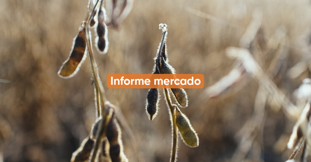 Informe Mercado JUNIO