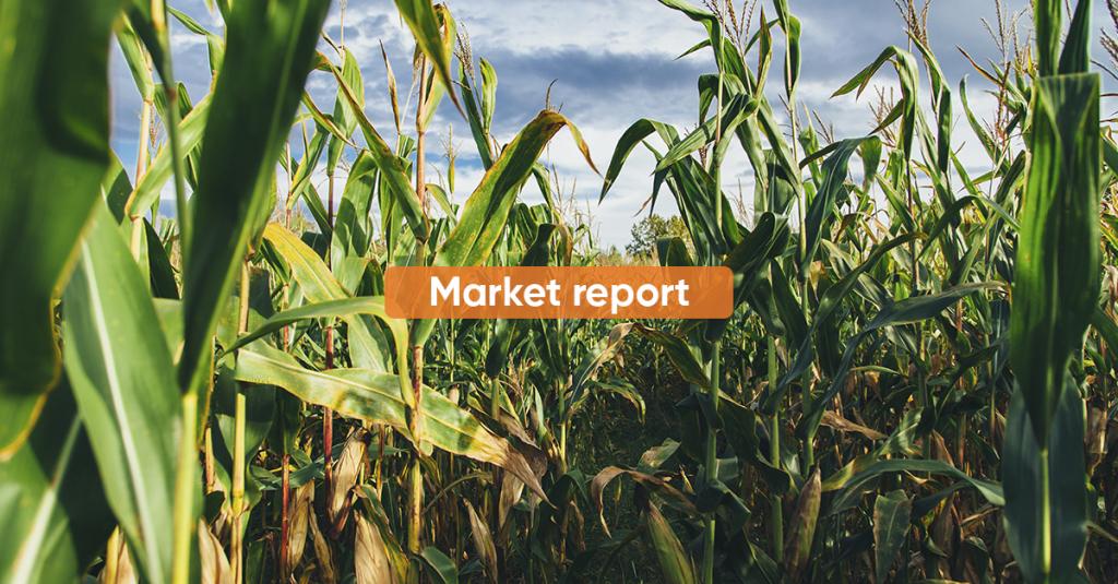 Market report SEPTEMBER