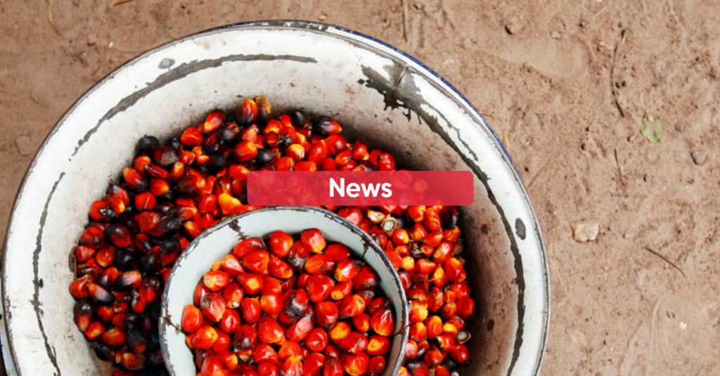 Palm Oil Progress Report